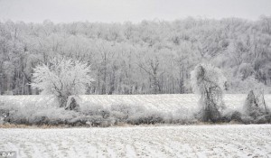 Ice covered fields of Metamora, Michigan, where I also grew up. (c) AP